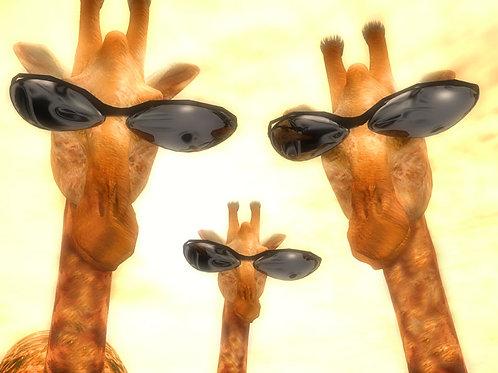 Cool Giraffe Family