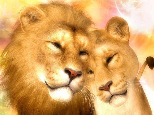 Lion and Lioness in Love