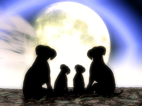 Puppy Family Moon Watching