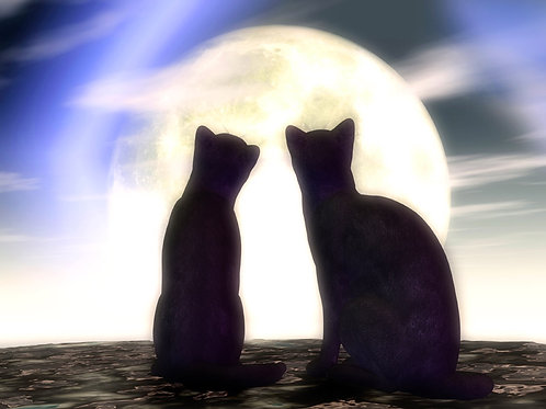 Kitty Duo in the Moonlight