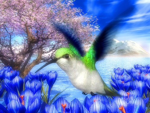 Emerald Hummingbird and Mountain Paradise