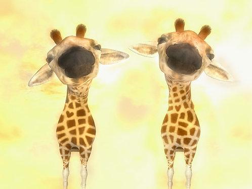 Giraffe Twins