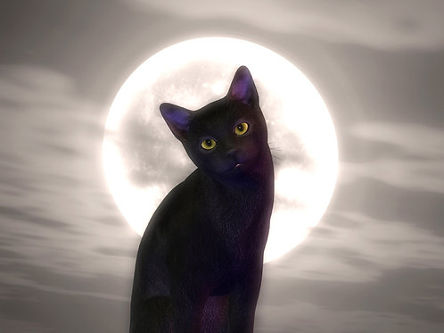 Kitty in the Night