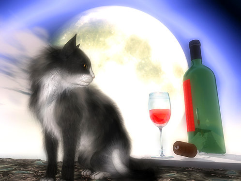 Kitty and Wine