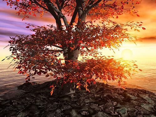 Fall Walnut Tree