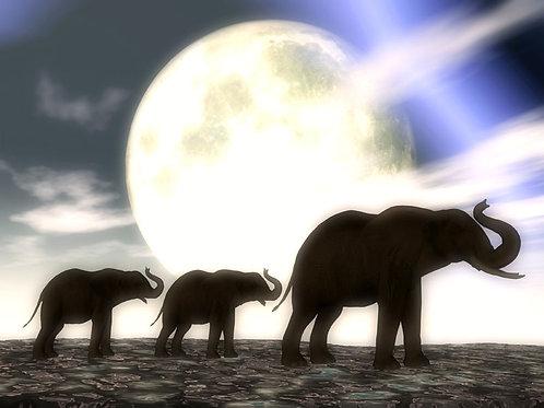 Duo Baby Elephants Blue