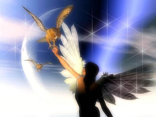 Fairy Owl Fantasy