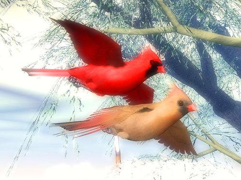 Winter Cardinal Love Birds