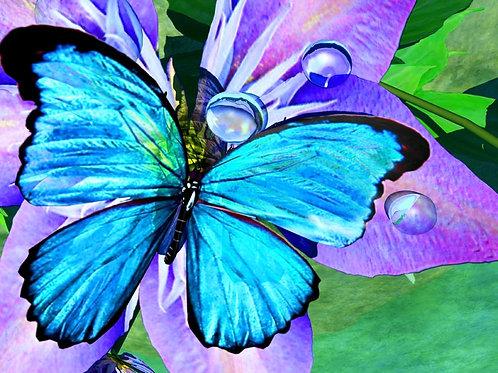 Blue Morpho Reflections