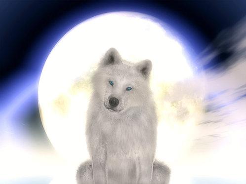 Arctic Wolf Dream