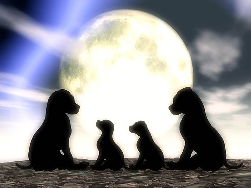 Puppy Family Enjoying the Moonlight