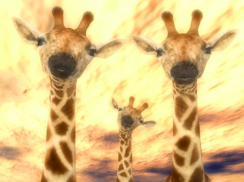 Giraffe Family Love