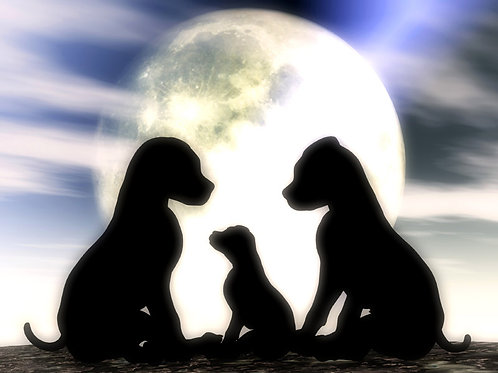 Little Family in the Moonlight