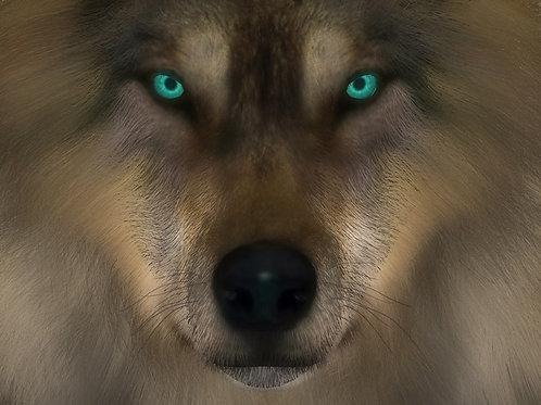 Wolf Stare Twilight