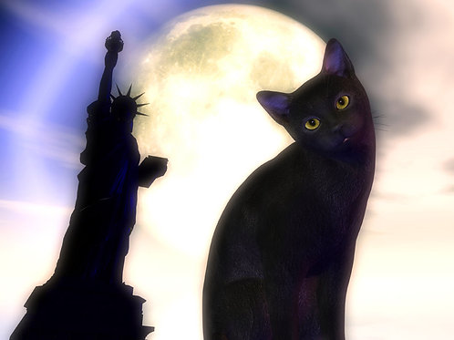Kitty in New York in the Moonlight