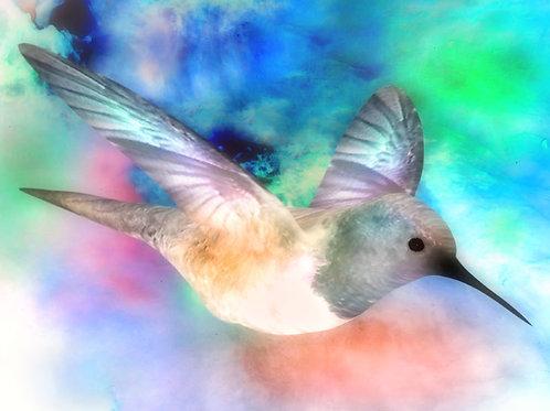 Nebulistic Hummingbird