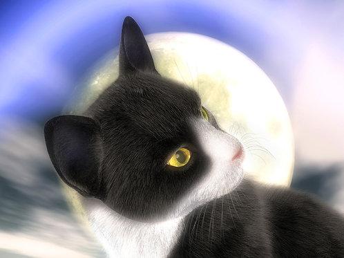 Tuxedo Kitty in the Moonlight