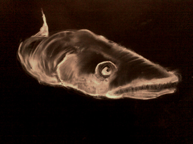 Fish   30x40 cm