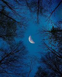 New Moon and Life Shifts...