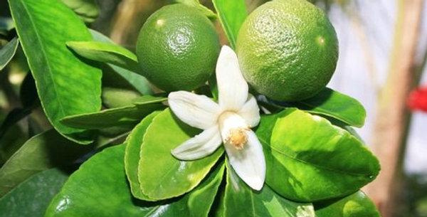 Organic Green Mandarin Essence 15ml