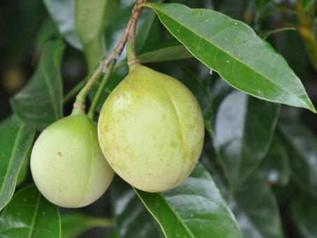 Essence of the Week:  Nutmeg