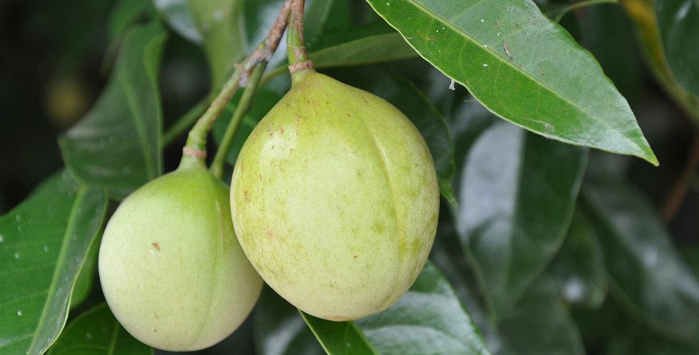 Organic Nutmeg Essence 15ml