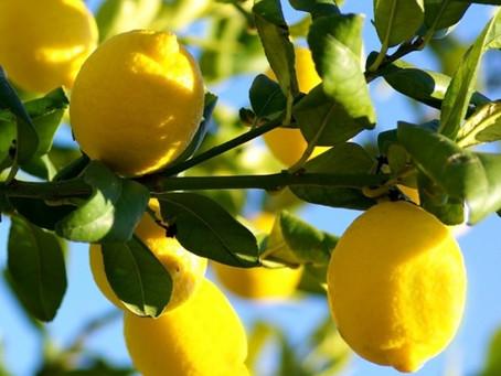 Essence of the Week: Lemon