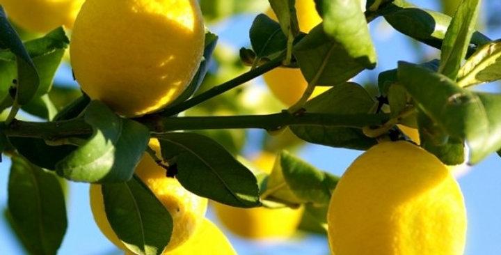 Organic Lemon Essence 15ml