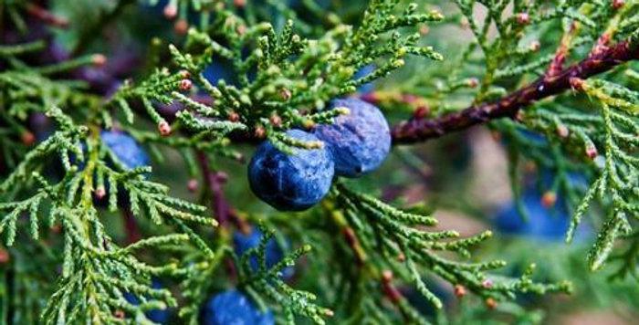 Organic Juniper Berry Essence 15ml