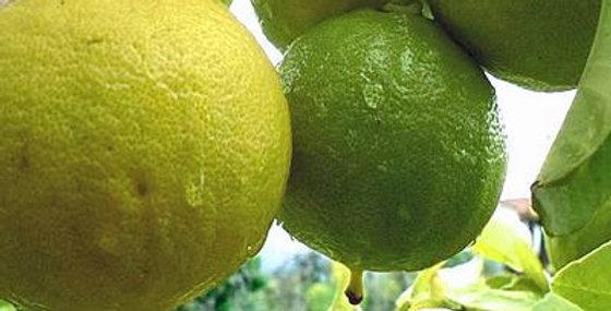 Organic Bergamot Essence 15ml