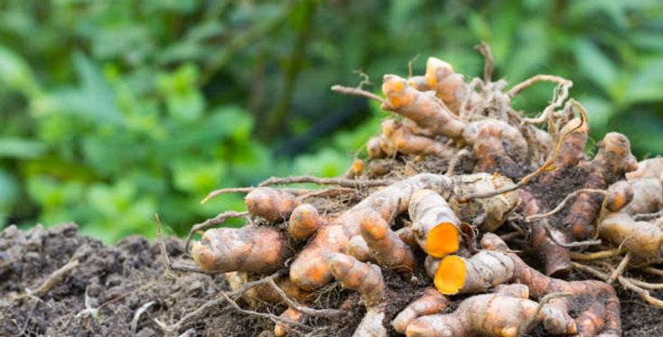 Organic Turmeric Essence 15ml