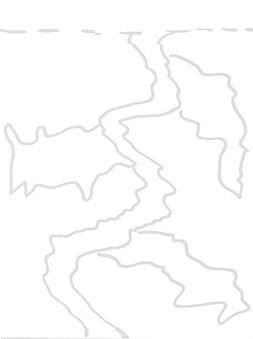 Kelp A.jpg