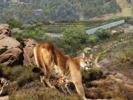 World's Biggest Wildlife Crossing Will Protect Animals From Drivers on the 101 in Los Angeles