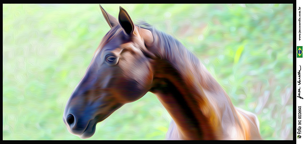 SÉRIE CAVALOS - Lindos cavalos do Centro Hípico Granja Viana - Efeito Pintura