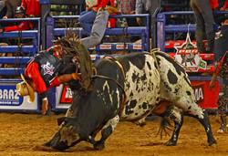 Ensaio Rodeio