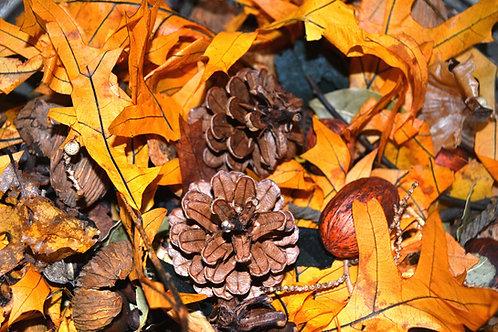 Harvest Potpourri