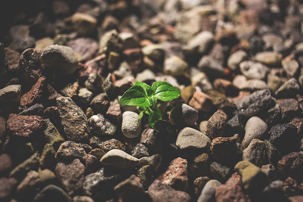 green-leafy-plant-starting-to-grow-on-be