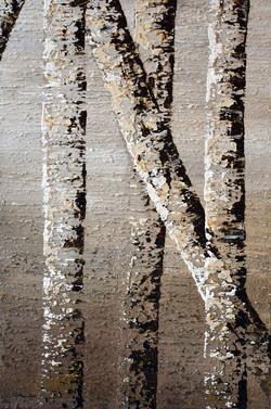 Birch Tree Reflection #7