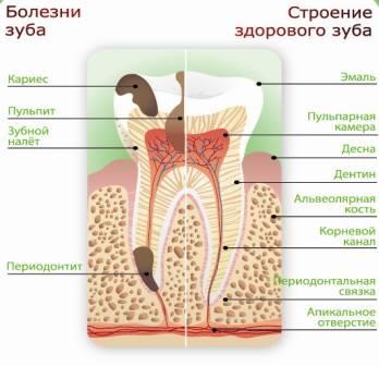 О зубах как об органе человеческого организма!