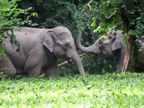 We're Celebrating World Elephant Day!