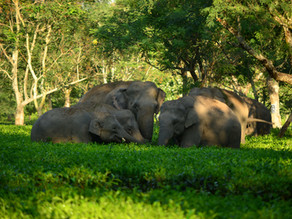 Our Latest Video: Keeping Wild Elephants In The Wild