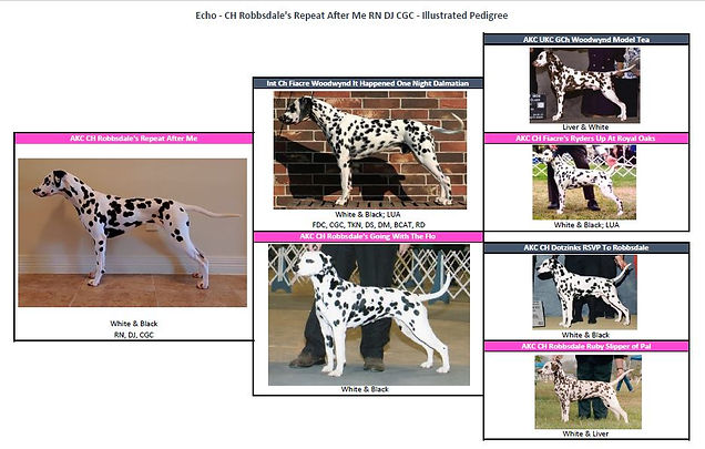 capra flo pedigree images.jpg