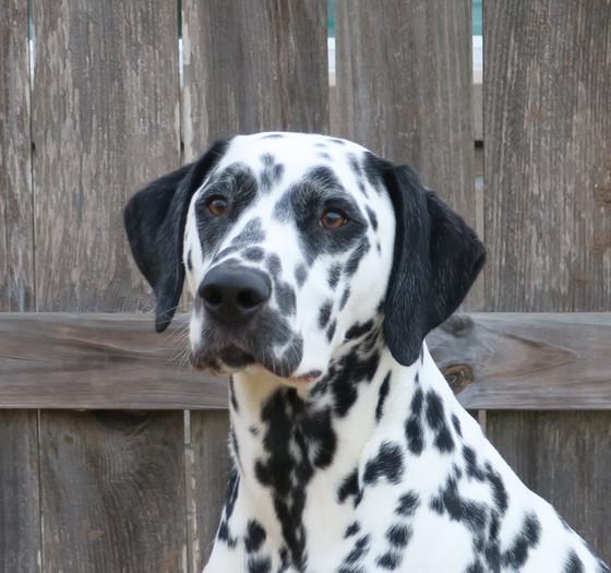 Brewster Winners Dog