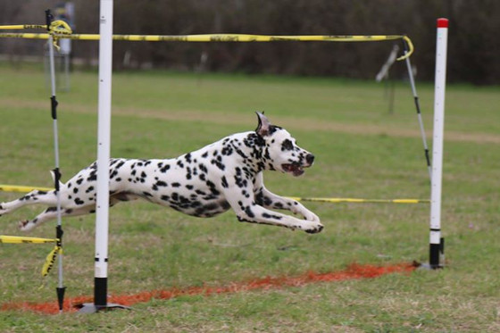 FastCAT for Fast Dogs