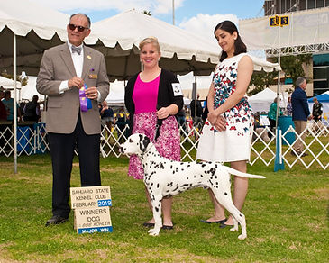 Taai Taai wins a 5 point major in Phoenix his first weekend showing.