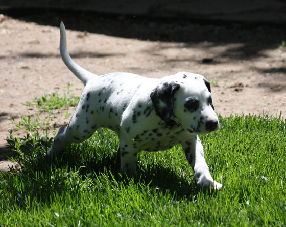 Our First Dog