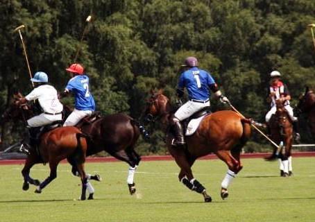 El Polo la calidad y el prestigio internacional.
