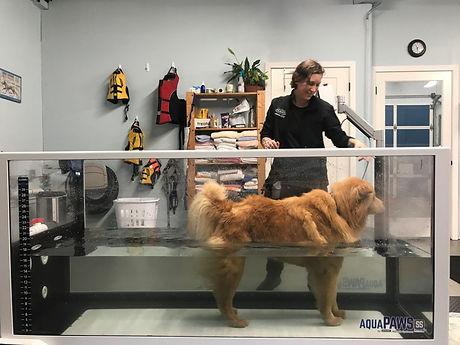 Four-Paws-Animal-Rehabilitation-water-tr
