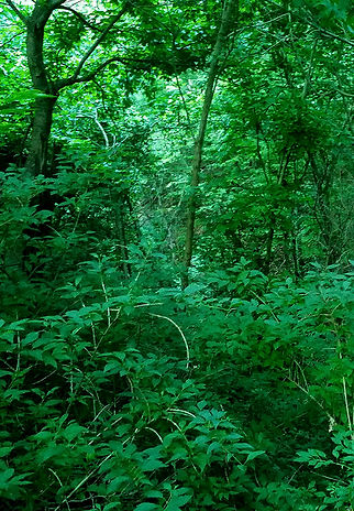 dark_woods_ii.jpg