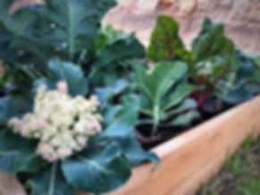 ערוגת הגינה.JPEG